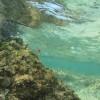 Cancun - Isla Mujeres - 12