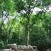 Palenque - 4